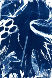 Untitled- Cyanotype